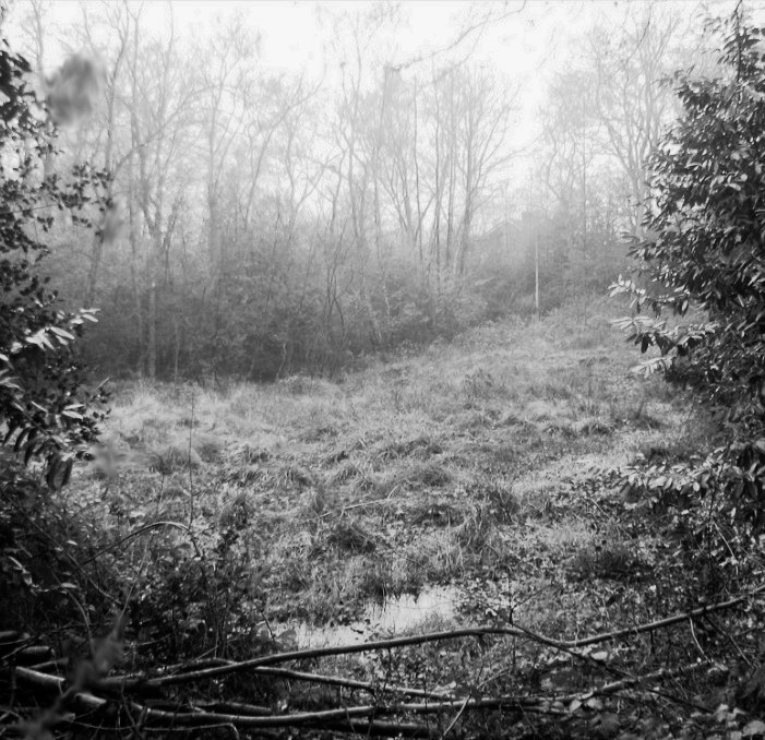 Rowhill Copse - The Bourne